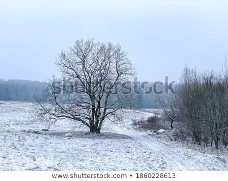 Bare Frozen Tree in Snowy Winter Field under Blue Sky Stock photo © maxpro