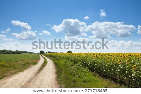 drogowego · żółty · słonecznika · dziedzinie · niebo - zdjęcia stock © mycola