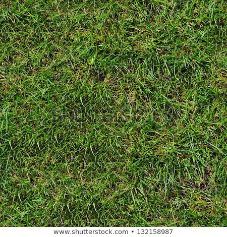 Green Meadow Grass. Seamless Tileable Texture. Stock photo © tashatuvango