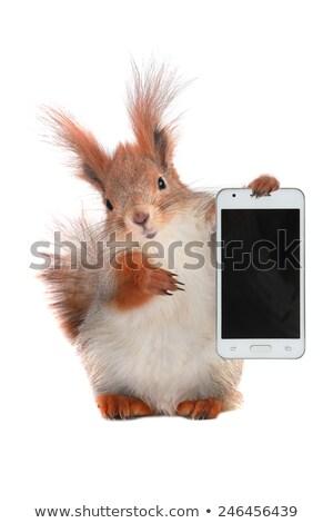Ardilla joven teléfono celular Foto Foto stock © songbird