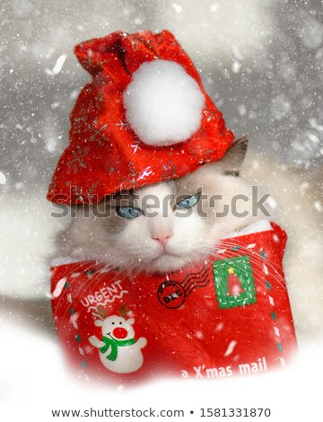 macska · kép · piros · baba · kék · macskák - stock fotó © gregory21