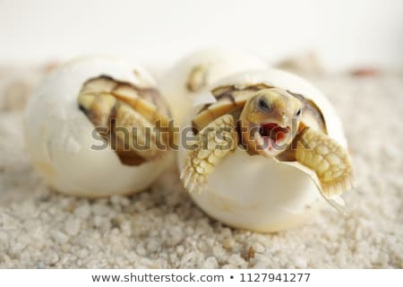 Stock photo: born in a egg