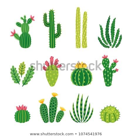 Kaktusz növény sivatag homok padló izolált Stock fotó © Lightsource