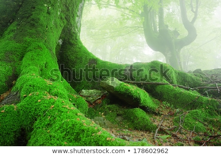 Low angle view of a fairy Stock photo © bmonteny