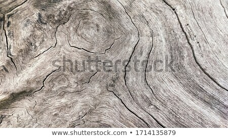 Plank with cracks and marks texture Stock photo © sundaemorning