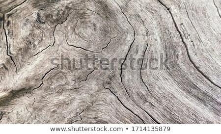Plank with cracks and marks texture stock photo © sundaemorning