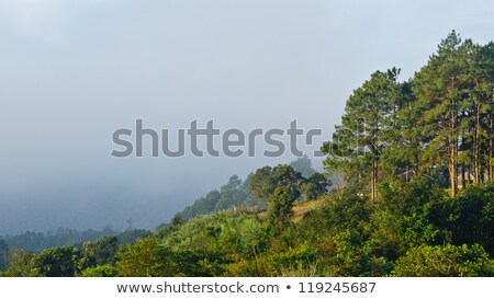 podium for natural view on viewpoint doi ang khang mountains stock photo © yongkiet