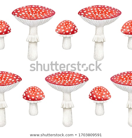 fly agaric stock photo © dirkr