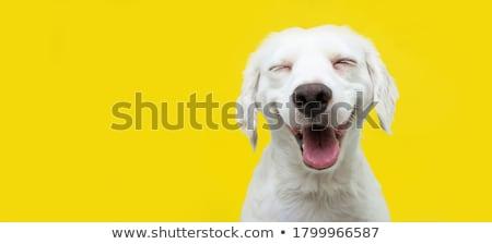 Mutlu köpek sevimli küçük oynama çalıştırmak Stok fotoğraf © eleaner