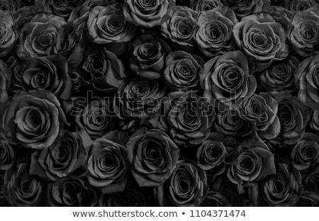 Zwarte steeg blad natuur computers grafisch ontwerp Stockfoto © Soleil