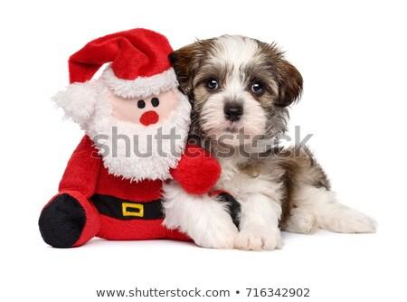 kutyakölyök · mikulás · angol · bulldog · visel · jelmez - stock fotó © mahoks