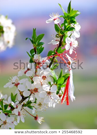 Roumain symbole début printemps arbre rouge Photo stock © alinbrotea