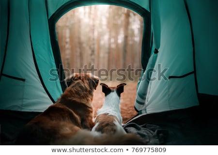 Chien camping bleu président animaux Photo stock © ivonnewierink