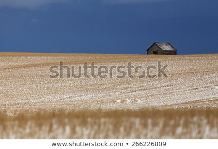 Prairie Landscape in winter Stock photo © pictureguy