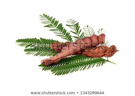 Acacia Concinna Seed Stock Photo Prashant Sahu Ziprashantzi