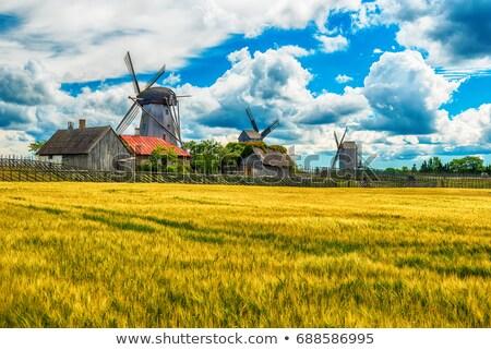 verão · paisagem · flores · natureza · luz · fazenda - foto stock © t3rmiit