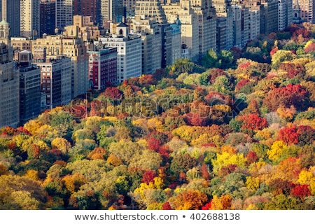 autumn afternoon in central park stock photo © rmbarricarte