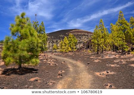 石 · 火山 · ピーク · テネリフェ島 · スペイン · 雲 - ストックフォト © amok