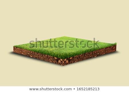 Yeşil toprak izometrik görmek çiçek ağaç Stok fotoğraf © teerawit