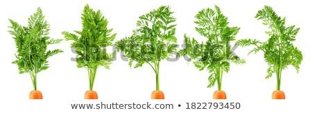 морковь лист белый оранжевый зеленый еды Сток-фото © Masha