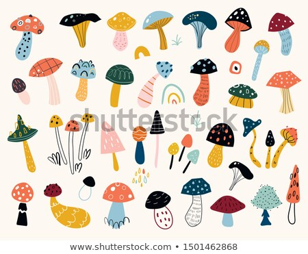 Collection of Forest Mushrooms Stock photo © zhekos