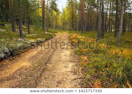 the sandy road in the woods stock photo © traza