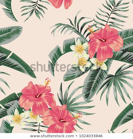 hibiscus · bloem · vector · Rood · bladeren · geïsoleerd · witte - stockfoto © orensila