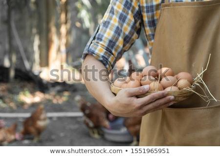 農家 バスケット 卵 白 木材 幸せ ストックフォト © bluering
