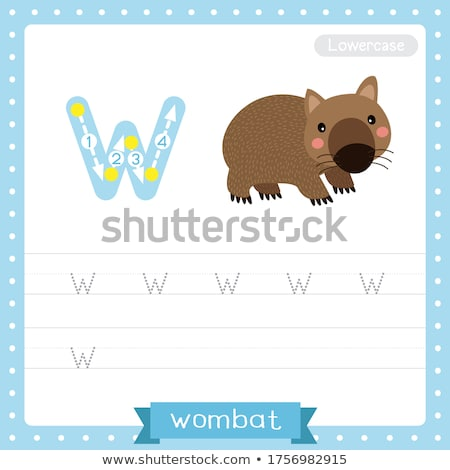 Flashcard letter W is for wombat Stock photo © bluering