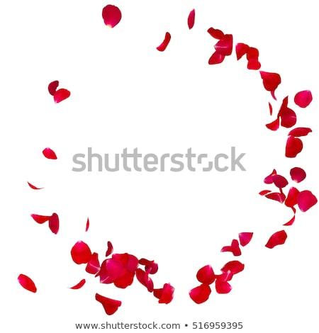 yeşil · yaprakları · kırmızı · gül · örnek · çiçek · doğa · arka · plan - stok fotoğraf © blackmoon979