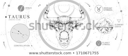 Taurus Stock photo © patsm