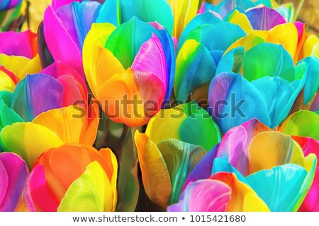 spring theme with flowers and rainbow stock photo © clairev