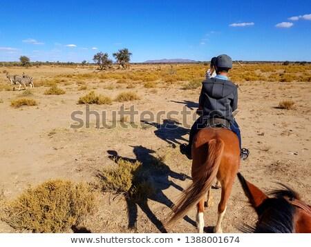 giraffe in the savannah of namibia stock photo © meinzahn