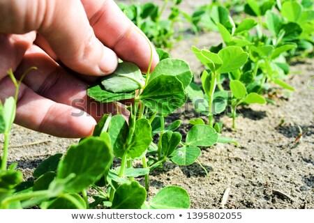 felelős · fejlesztés · környezeti · zöld · béka · visel - stock fotó © stevanovicigor