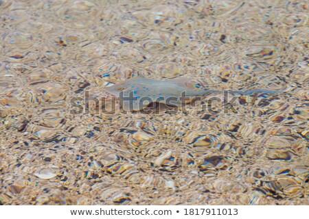 электрических морем нижний морской рыбы фон Сток-фото © galitskaya