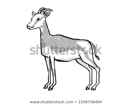 Mhorr Gazelle Endangered Wildlife Cartoon Drawing Stock photo © patrimonio