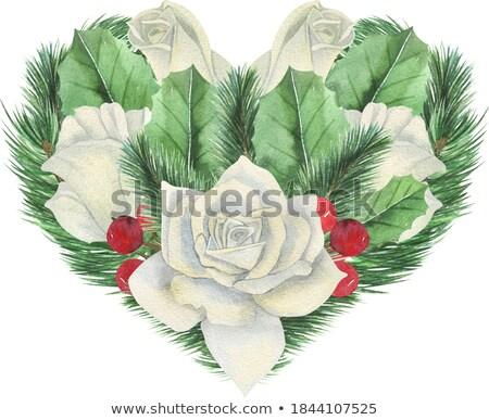 Cartão belo branco rosas sempre-viva romântico Foto stock © artjazz