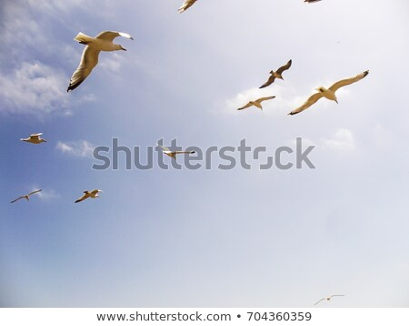 sirályok · repülés · levegő · tenger · óceán · toll - stock fotó © Harveysart
