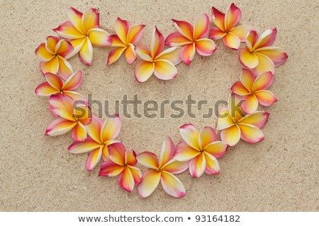 group of frangipani on beach stock photo © herrbullermann