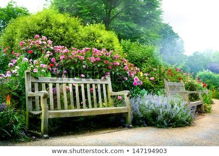 Bahçe bank doğal sahne bahar çim Stok fotoğraf © Viva