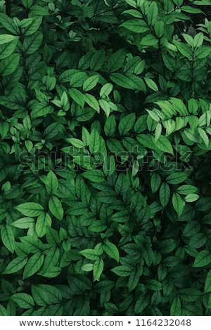cool green leaf stock photo © oblachko