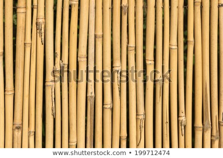 bamboo cane wood texture background Stock photo © lunamarina