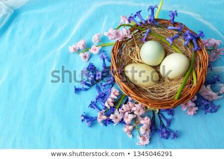 Blauw hyacint vers geïsoleerd witte plant Stockfoto © smithore