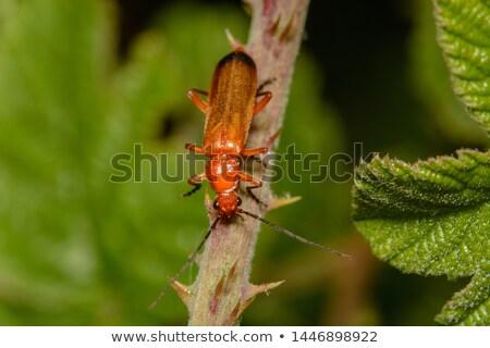 Bogár fű szár tavasz nyár narancs Stock fotó © chris2766