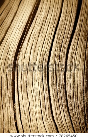 close up detail of a tree trunk knot from old branch stock photo © inxti