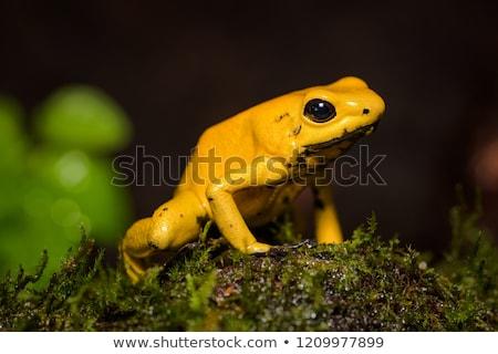 gif · kikker · giftig · dier · waarschuwing · kleuren - stockfoto © jkraft5