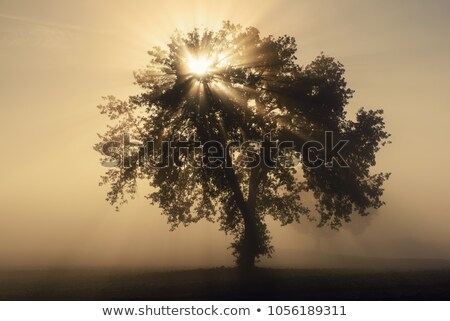 Stock photo: single tree in mist