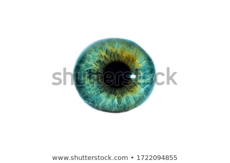 Human green eye ball organ Stock photo © Lightsource