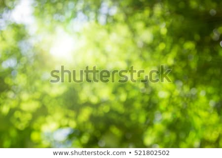 Stock photo: Abstract nature green background (sun flare).