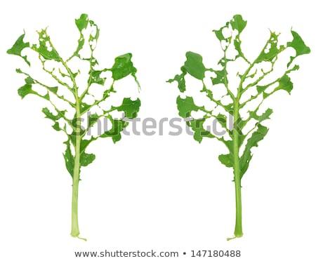zarar · yeşil · yaprak · doku · doğa - stok fotoğraf © brozova